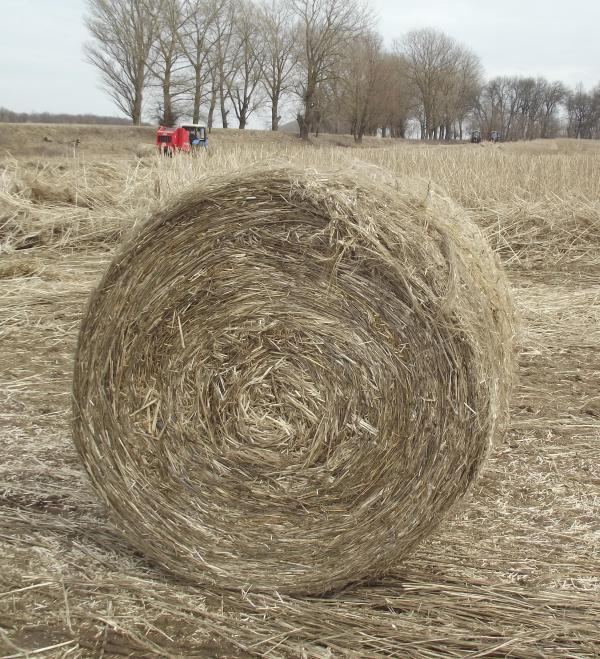 harvest_hemp_1